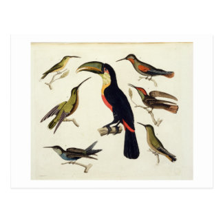 Native birds, including the Toucan (centre), Amazo Postcard