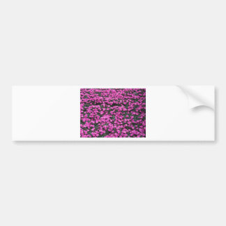 Natural background of purple carnation flowers bumper sticker