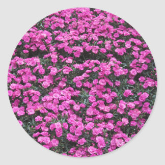 Natural background of purple carnation flowers classic round sticker
