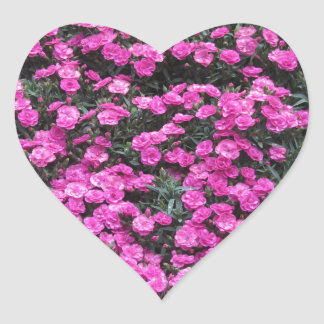 Natural background of purple carnation flowers heart sticker