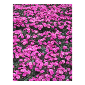 Natural background of purple carnation flowers letterhead