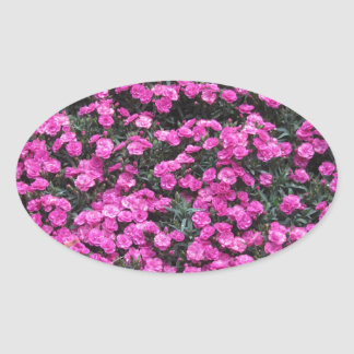 Natural background of purple carnation flowers oval sticker