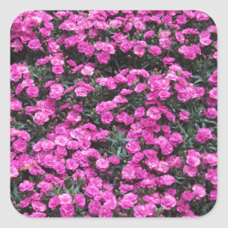 Natural background of purple carnation flowers square sticker