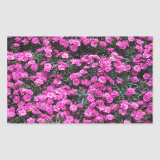 Natural background of purple carnation flowers sticker