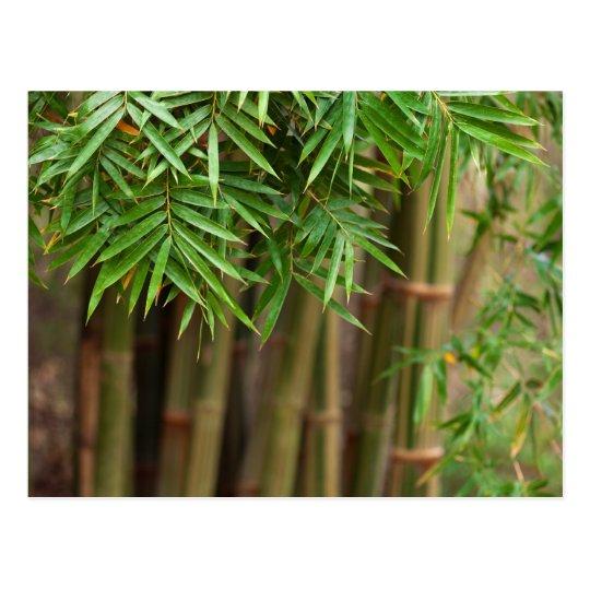 Natural Bamboo Zen Background Customized Template Postcard