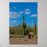 Natural Cactus Landscape 3994 Poster