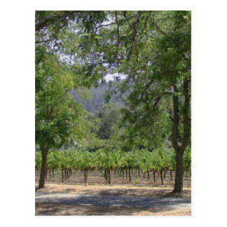 Natural California Vineyard Postcard