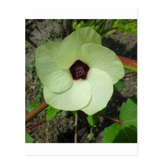 Natural Green Flower Postcard
