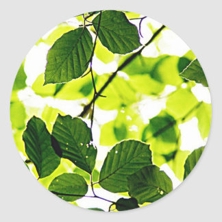 natural  Green leaf leaves Trees Earth Beautiful D Classic Round Sticker