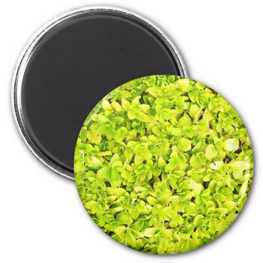 natural  Green leaf leaves Trees Earth Beautiful D Refrigerator Magnet