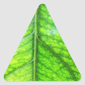natural  Green leaf leaves Trees Earth Beautiful D Triangle Sticker