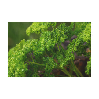 Natural Green Parsley Herb Photo for the Kitchen Canvas Prints