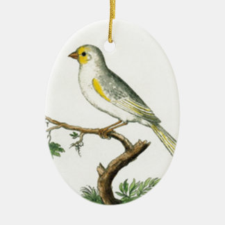 Natural History of Birds Ceramic Oval Ornament