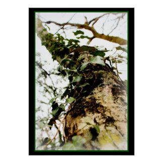 natural poster art forest tree ivy foams