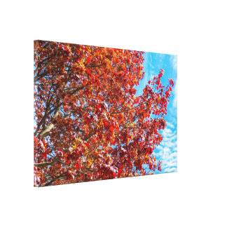 Natural Red Maple Tree Canvas Print