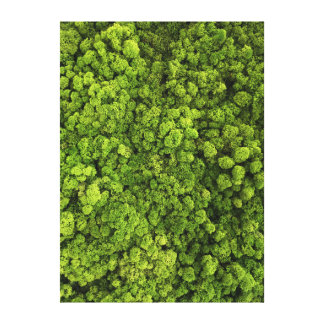 Natural Scandinavian Green Moss Background Design Canvas Print