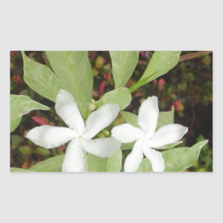 Natural White Beautiful Flower