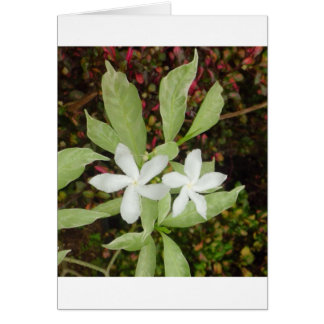 Natural White Beautiful Flower Card