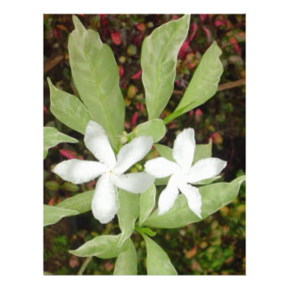 Natural White Beautiful Flower Letterhead Template