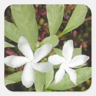 Natural White Beautiful Flower Square Sticker