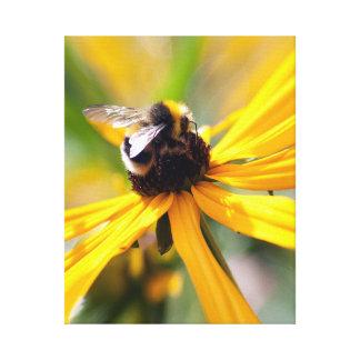 Nature Bee Nectar Yellow daisy Canvas Print