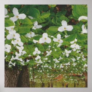 Nature Canada Flowers : Romantic Sensual LOWPRICE Poster