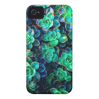 Nature Green Succulent Photo iPhone 4 Cover