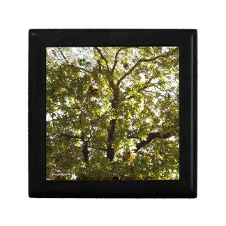 Nature Green Tree Jewelry Box