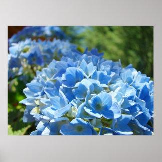 Nature Heals art prints Blue Hydrangea Flowers
