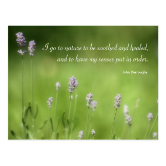 Nature Heals Lavender Photography & Quote Postcard