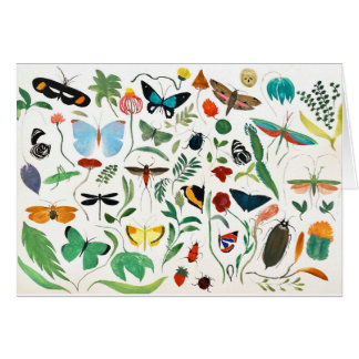 Nature Insects Card