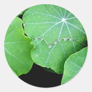 Nature Photograph Sticker