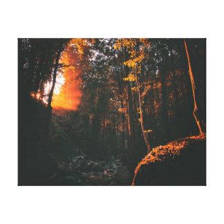 Nature photography   Forest   Sunrise Canvas Print