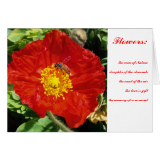 Nature Poetry Poppy Card