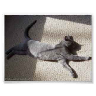 Nature Poster Sleeping Russian Blue