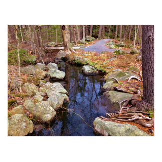 nature stream trees postcard