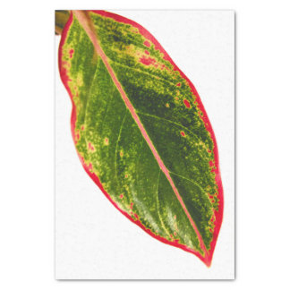 Nature Themed Tissue Tropical Red Aglaonema Leaf Tissue Paper