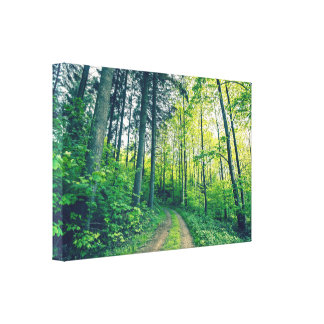 Nature trail in a green forest canvas print