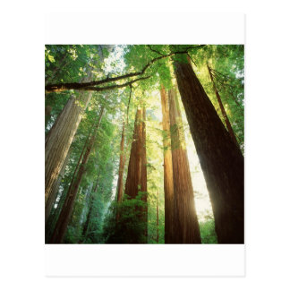 Nature Trees Summer Sunlight Postcard