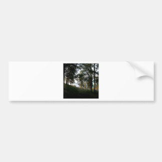 Nature Trees Through The Woods Bumper Sticker