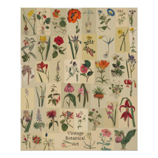 Nature Vintage Botanicals Collage Print