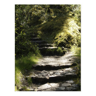 Nature Walk and Mossy Steps Scenic Photo Postcard
