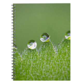 Nature Water Drops Connect with Cosmic Spiral Notebook