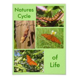 Natures Cycle of Life Poster