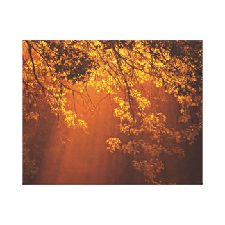 Nature's Morning Sun Rays Canvas Print