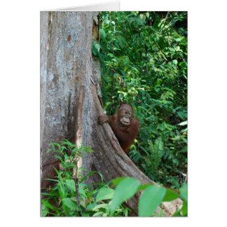 Nature's Original Tree Hugger in Rain Forest Card