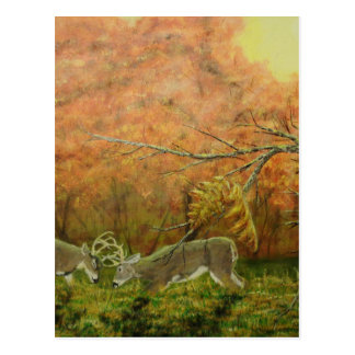 Nature's Witness Postcard