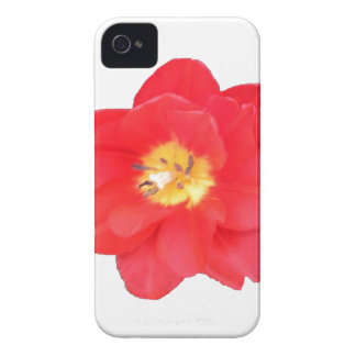 Natures's Beauty II iPhone 4 Case-Mate Case
