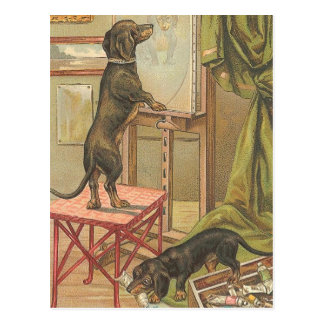 Naughty Dachshunds Postcard