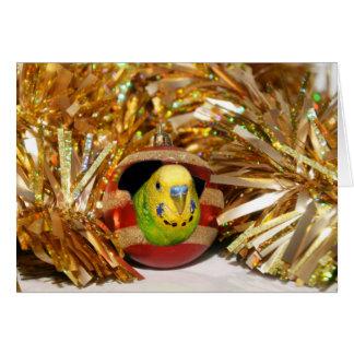 Naughty parakeet Christmas Card